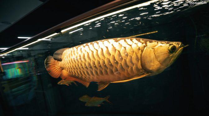 KL吉隆坡數一數二的大型水族魚館!!! AQUAZOOM !!